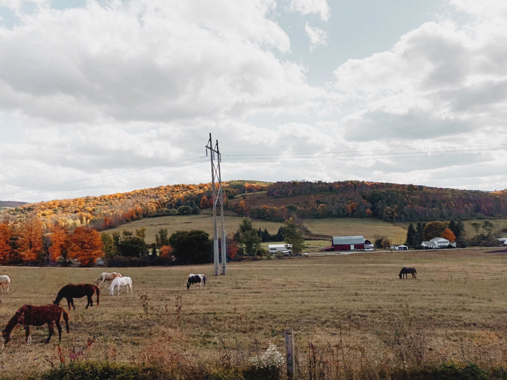 New England Farm in the Fall | biblio-style.com