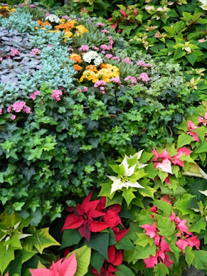Allan Gardens Conservatory 2017 Christmas Flower Show poinsettias and succulents by garden muses-not another Toronto gardening blog