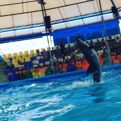 #Worldfamous #dolphinshow