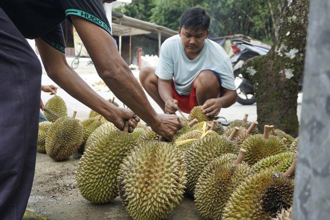 Durian Deles Mbok Dalmi, Klaten