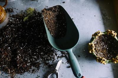 La importancia de un sustrato rico en materia orgánica las plantas