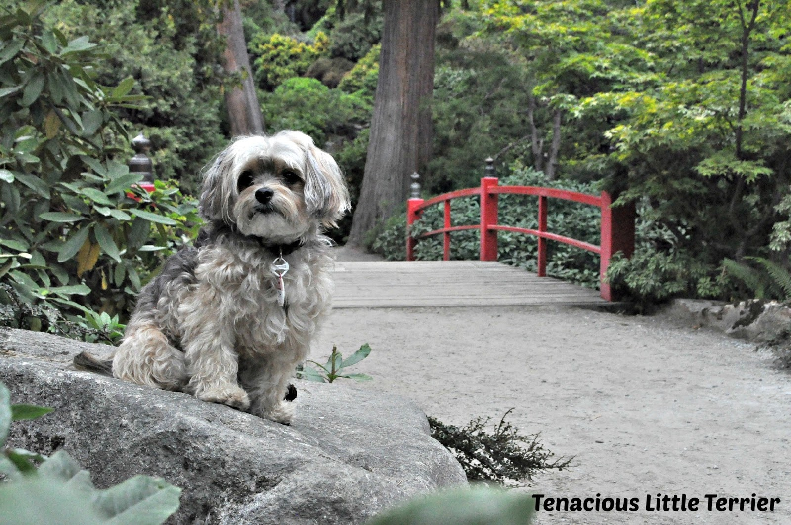 however the kubota garden in seattle allows dogs as long as they are leashed and you clean up after them it is also open year round during daylight hours - Kubota Garden