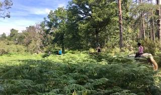 horseback riding in fern bushes in Loire valley