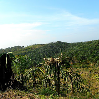 perkebunan kelapa sawit di kejauhan menuju batu dinding Borneo