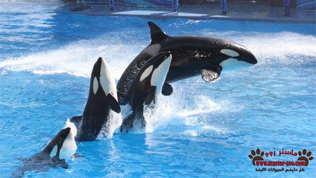أنواع الحيتان وأخطرها kinds of Whales