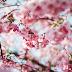 Playlista: Wiosna