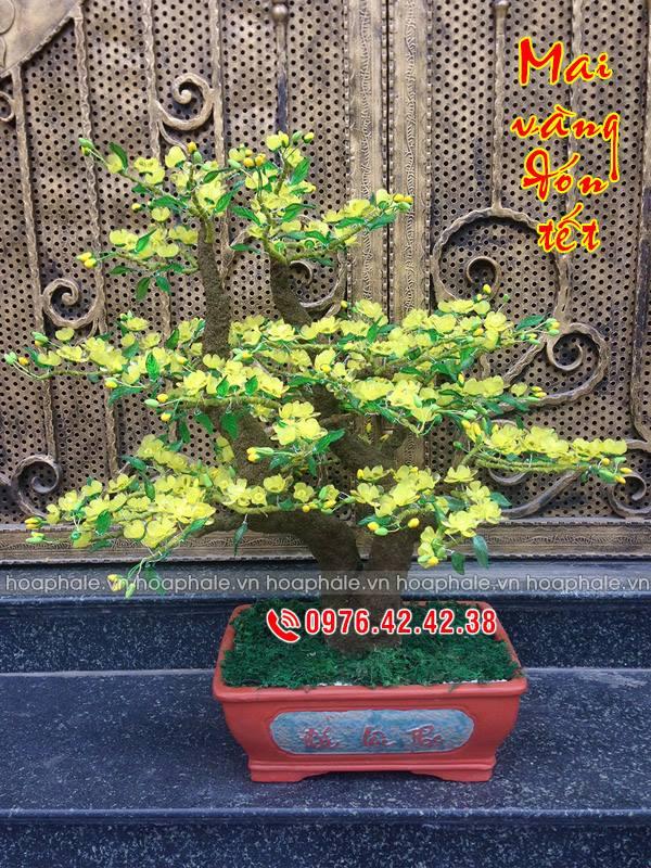 Goc bonsai mai dao tai Me Linh