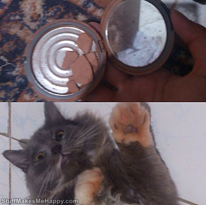 Small Thieves: 23 Funny Cats Pictures to Say You Wow