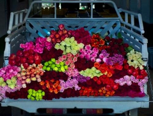 Dari Hobi Menjadi Uang dengan Usaha Bisnis Sewa Tanaman Bunga Hias
