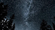 Forest Milky Way Road mobile wallpaper