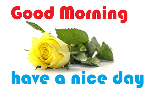Good Morning have a nice day yellow rose image