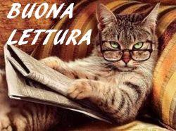 Immagine divertente ...Un gatto con gli occhiali, che legge il giornale.