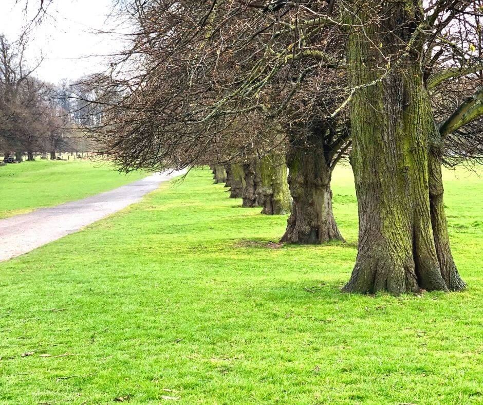10-benefits-of-a-daily-walk-trees