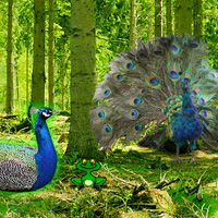 Games2Rule Peafowl Forest Escape