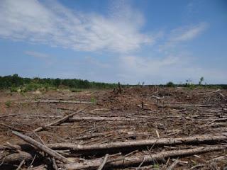 Gerodete Wälder aufgrund des Futtermittelanbaus