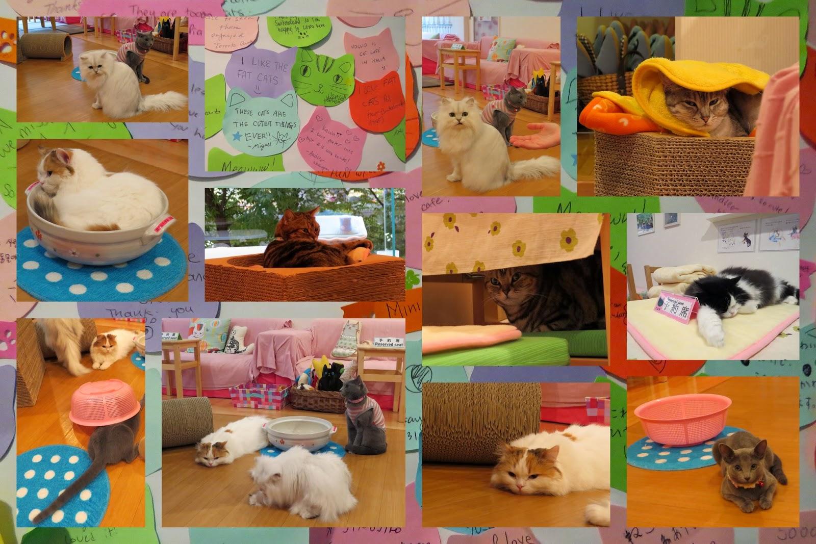 Cat Cafe - Tokyo