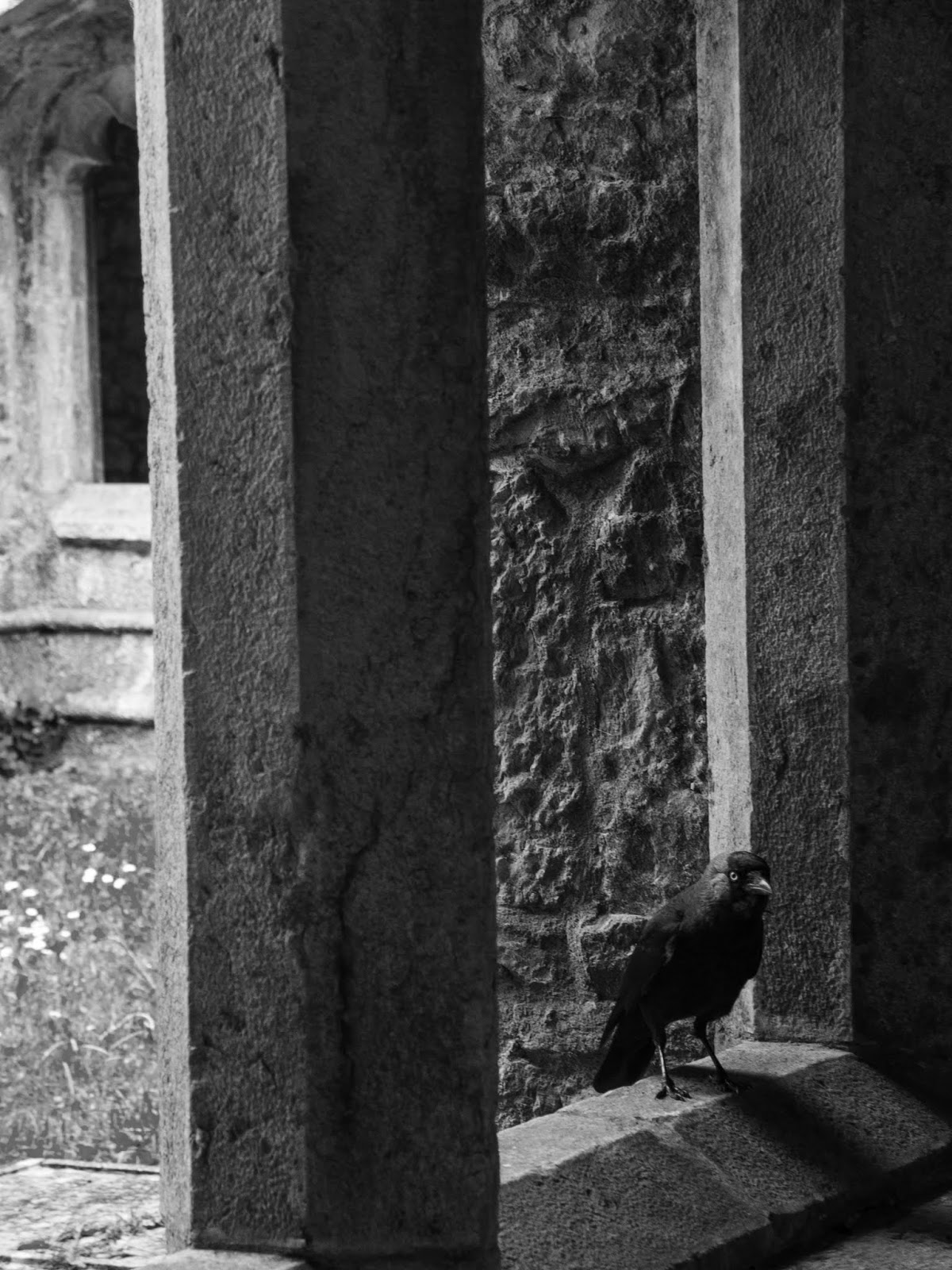A curious crow sitting on a window looking out into a cloister square in a friary in Adare, Co.Limerick.