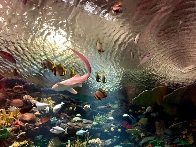 everything you need to know about the new york aquarium in brooklyn
