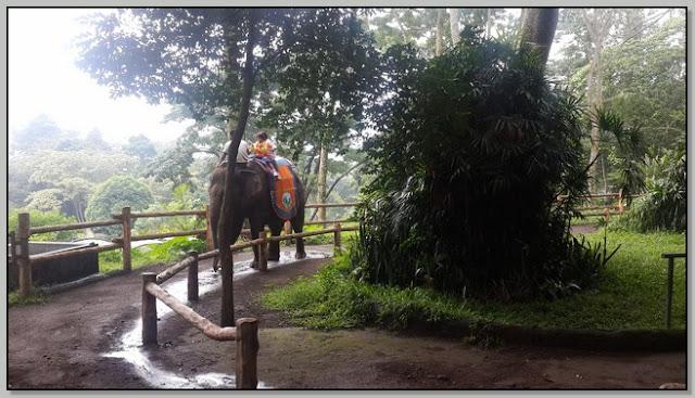 Menikmati Atraksi di Taman Safari Prigen