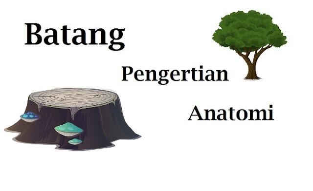 Batang : Pengertian dan Anatominya