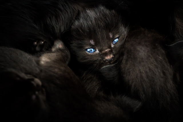 'Oscura mirada' de Carlos Larios