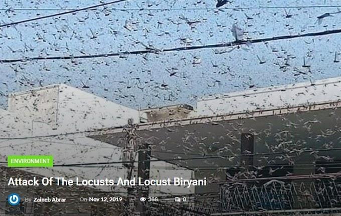 Assault Of The Locusts And Locust Biryani