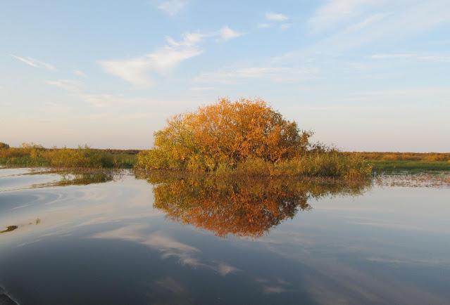 Осенние кусты