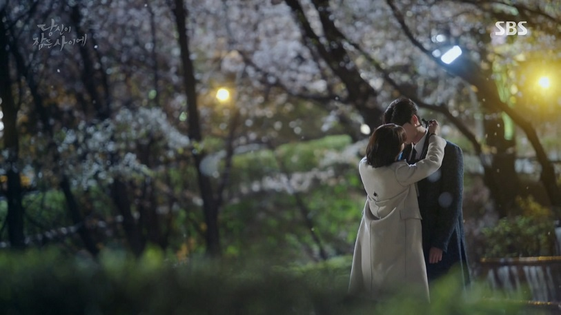 While you were sleeping : Mt. Ansan Cherry Blossom Walkway (안산 벚꽃길)