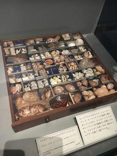 大英自然史博物館展⑤