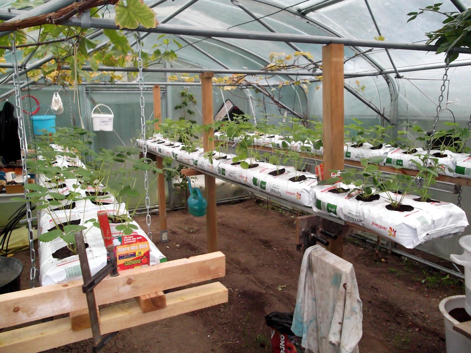 passion tomates 3 lignes de fraises hors sol 100 fraisiers remontants. Black Bedroom Furniture Sets. Home Design Ideas