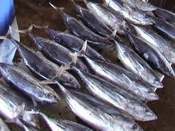 ikan tuna segar ada di pasar
