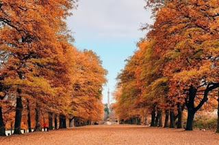 7 Benefits of Autumn for Human Life That Are Rarely Known