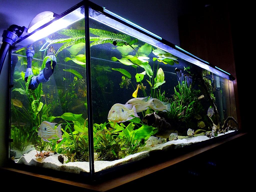 10 dolog, amit tudni kell az akvárium társításáról rca összekapcsolás