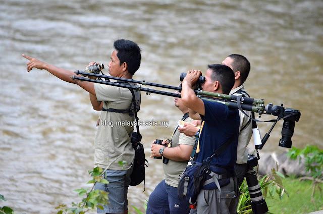 Bird Watching Malaysia