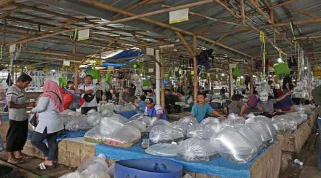 Jam Buka Pasar Ikan Hias Parung Bogor Terbaru 2020