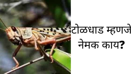 Toldhad in Maharashtra