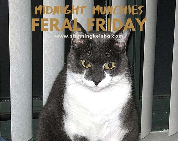 Feral Friday: Midnight Munchies