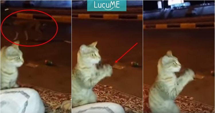 Tingkah Kocak Penyamaran Kucing Biar Nggak Terlihat