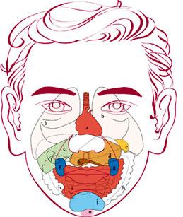 Feflexología facial