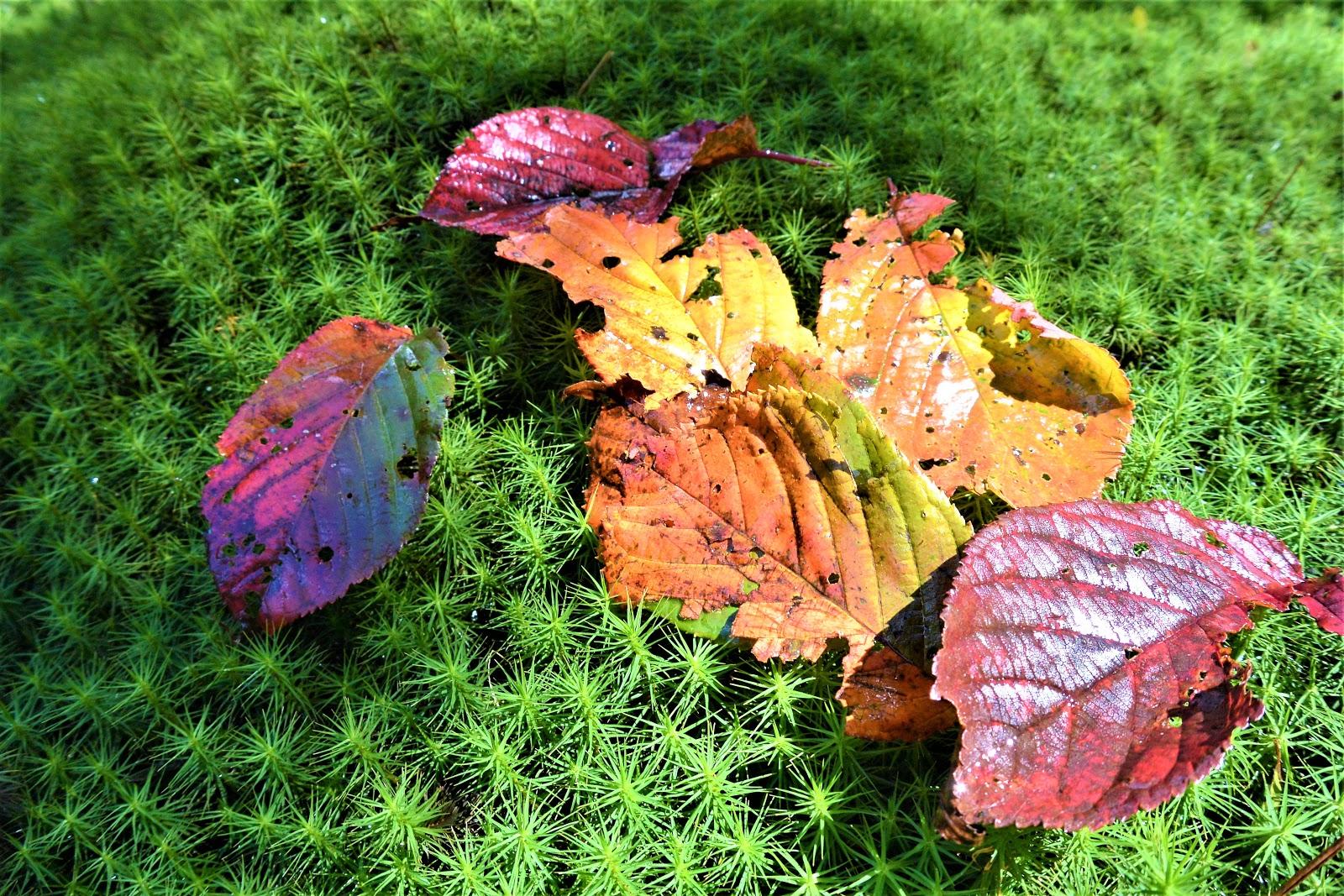 し る 山風 ば むべ の を から れ 草木 に 吹く を 嵐 らむ といふ 秋 の