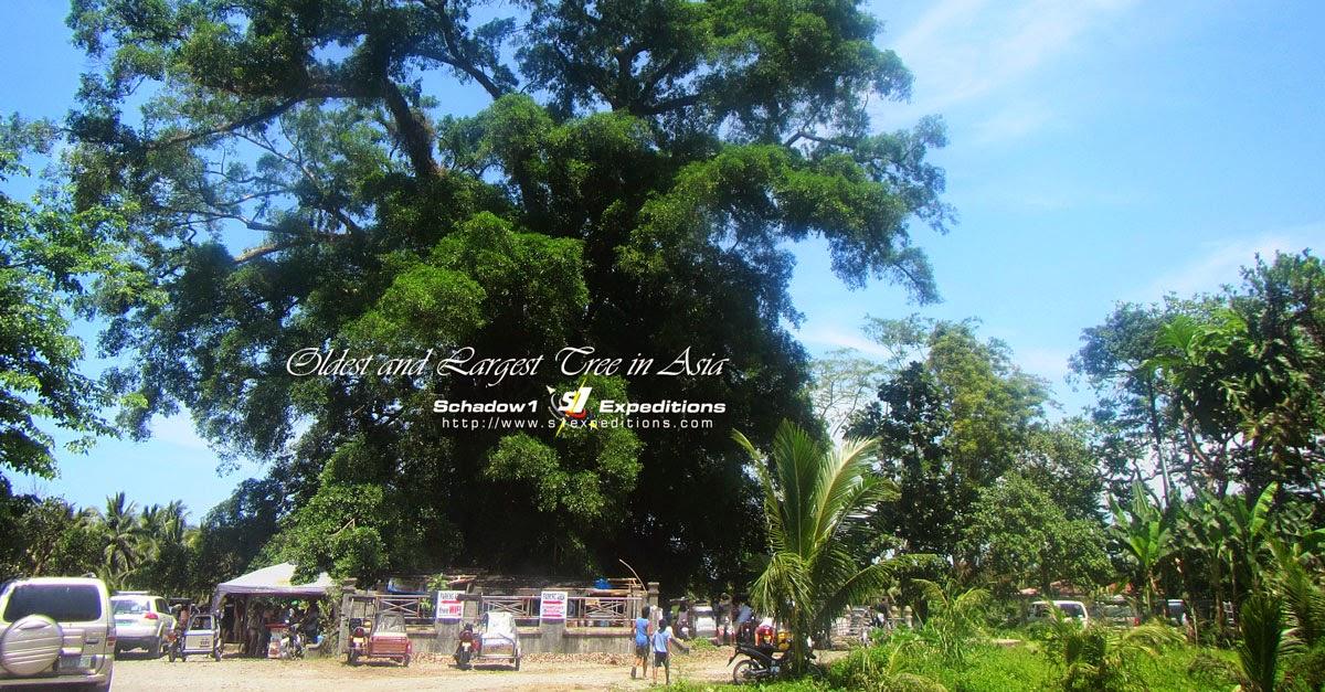 Centuries-old Balete Tree, Maria Aurora - Schadow1 Expeditions
