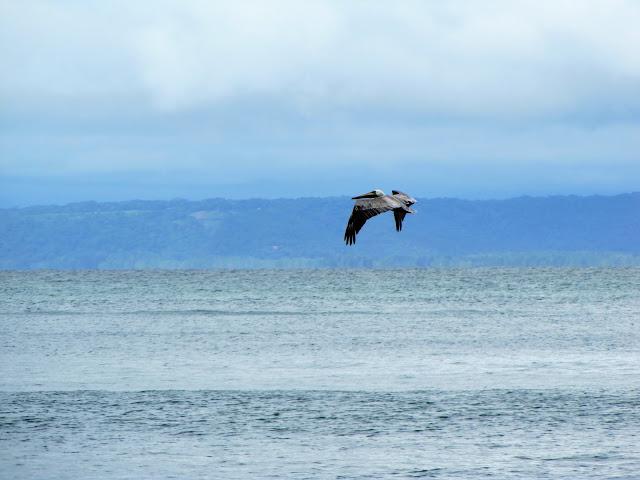 pelican beach costa rica