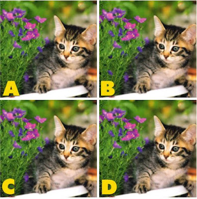 Which image is different? image 25