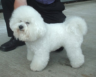 Gail Carriger give as Customer Warning: Wiltshire Wigs, Gail Looks Like a Bichon Frise & Other Issues