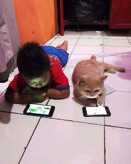 Foto lucu kucing main hp
