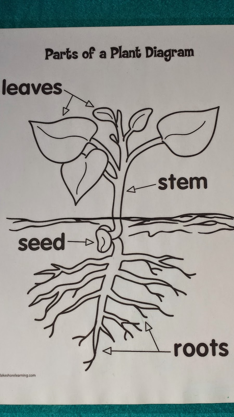Munchkin and Bean: Life Cycle of a Plant
