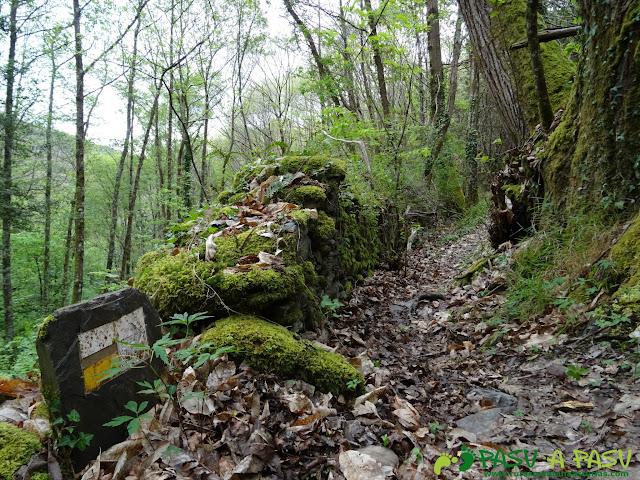 Ruta de los Castros. Zona boscosa entre los Mazos y las Viñas