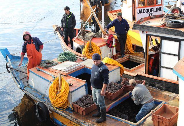 Maullín: Pescadores artesanales obtienen certificación Fair Trade para comercializar locos