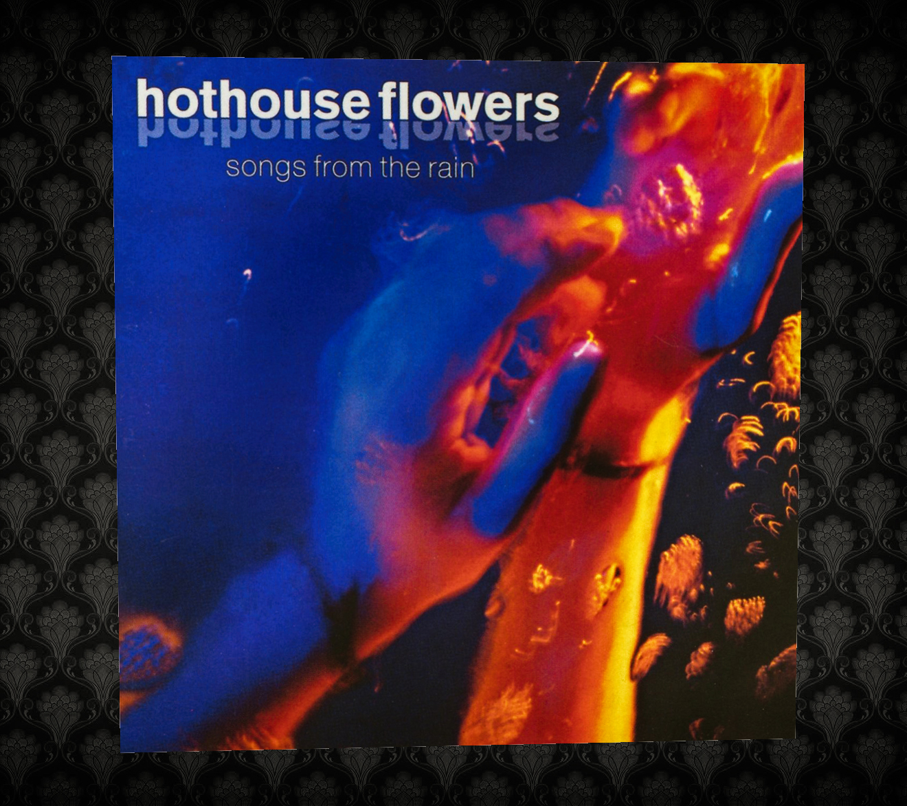 Sound Vision Thing Hothouse Flowers Songs From The Rain
