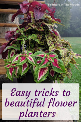 Coleus planter, 3 colors.